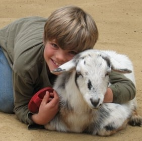 Bootsy the goat and child at sequoia park zoo's barnyard exhibit