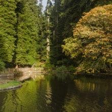 Sequoia Park-14