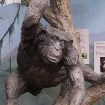 statue of bill the chimp at sequoia park zoo