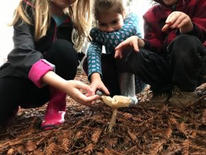 Family Nature Club - Nature Collecting @ Lamoree Learning Lab
