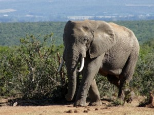 Conservation Lecture: Elephants - Winning the War on Ivory