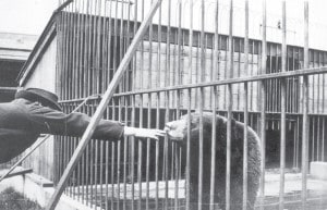 In the past, animals were kept in small barren cages, and few safety barriers protected animals from people (or vice versa)