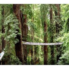PUBLIC MEETING ABOUT REDWOOD CANOPY WALK PROJECT